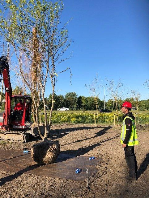 floriade-boomproject-boom-planten