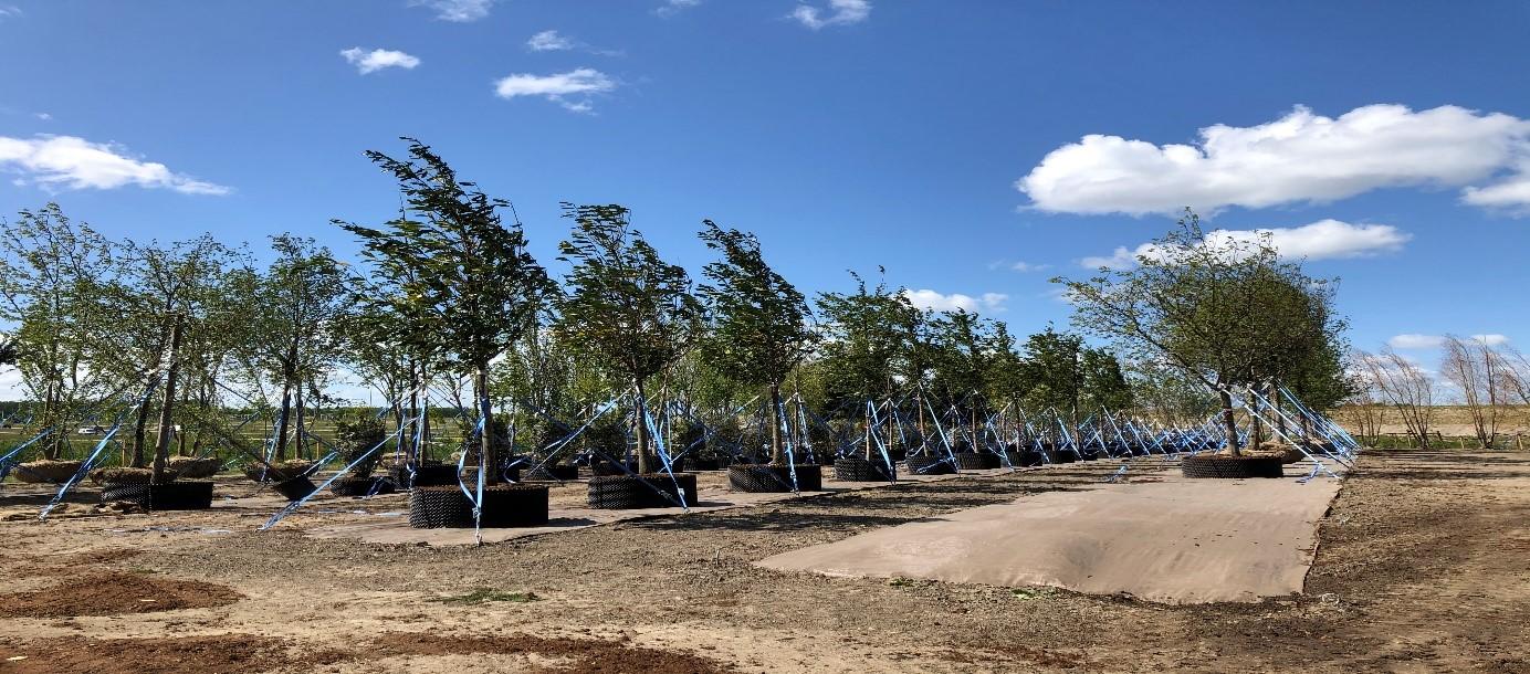 floriade-bomen-almere